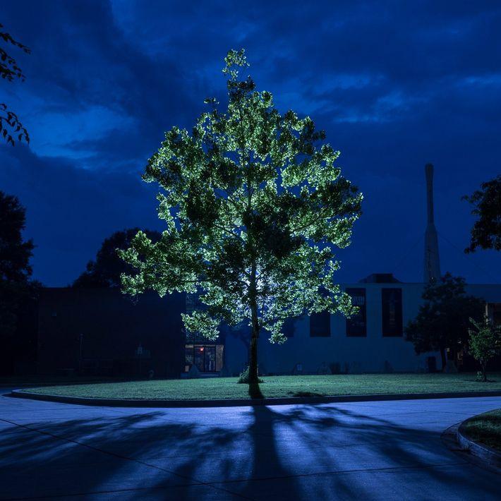 Un arbre lunaire se dresse fièrement, éclairé par des lumières artificielles, au Goddard Space Flight Center ...
