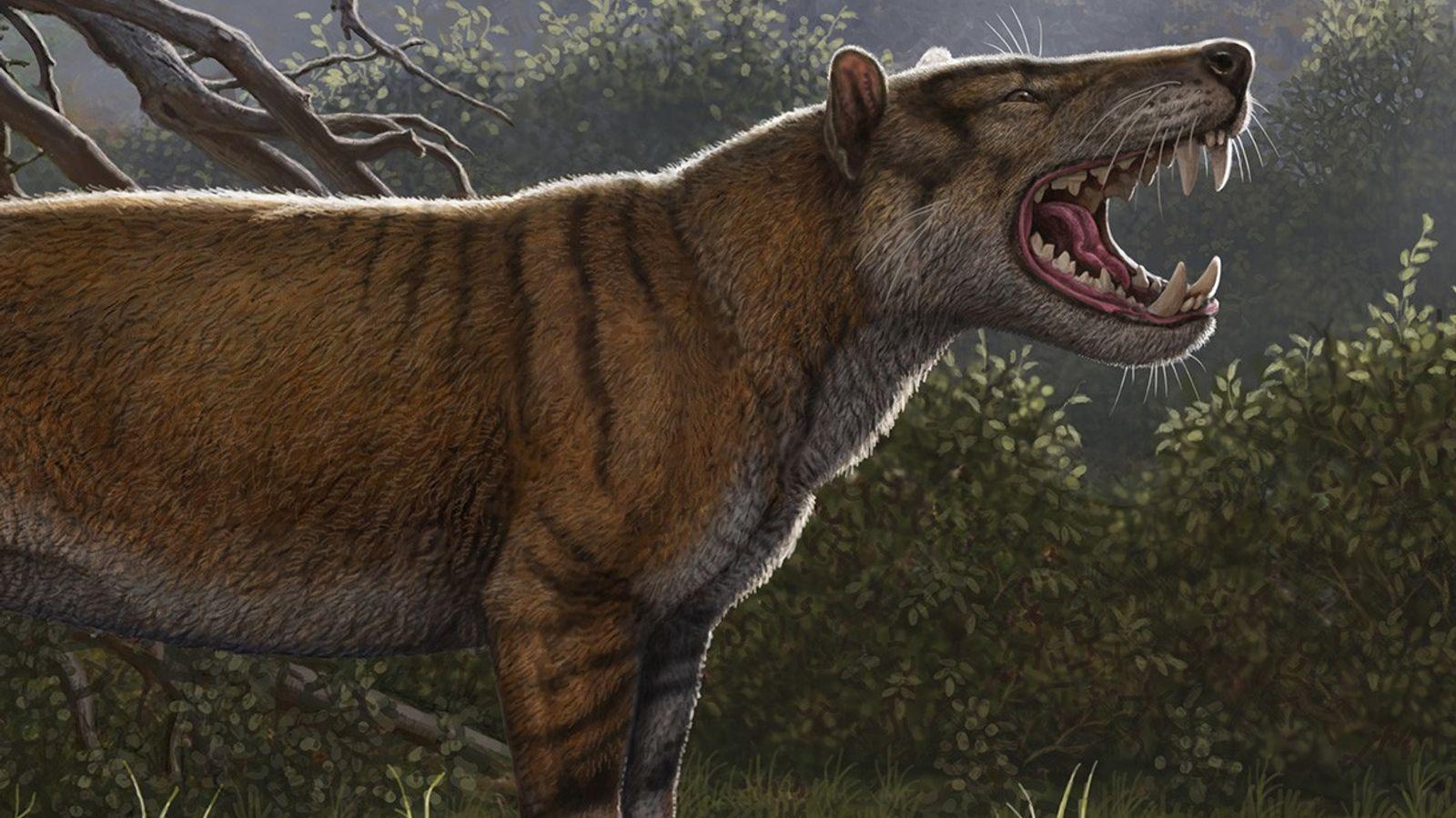 Simbakubwa kutokaafrika est un énorme carnivore connu grâce aux fossiles de sa mâchoire, d'une partie de ...