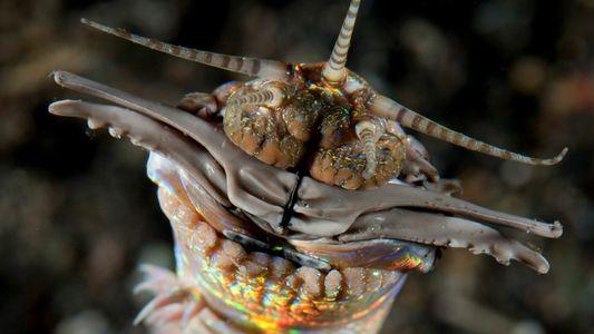 Ces vers marins géants peuplaient déjà les fonds océaniques à la préhistoire