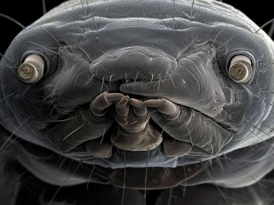 Ces photographies extraordinaires dévoilent le monde caché des insectes
