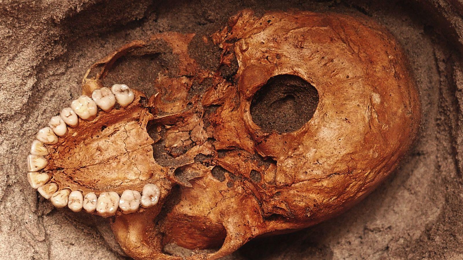 Un crâne humain enseveli dans le sable le long du fleuve Pangani en Tanzanie, entre les ...