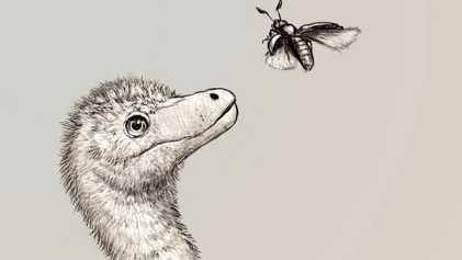 Découverte des premiers fossiles embryonnaires de tyrannosaures