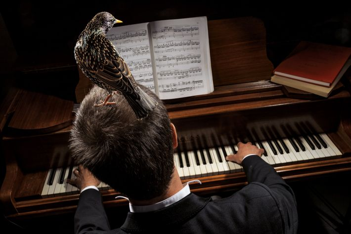 Un étourneau sansonnet en résidence chez des musiciens de Somerset, en Angleterre.