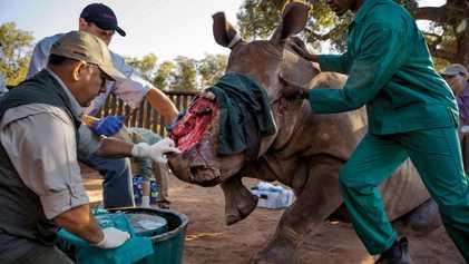 Les croyances de la médecine chinoise à l'origine d'un important trafic d'animaux