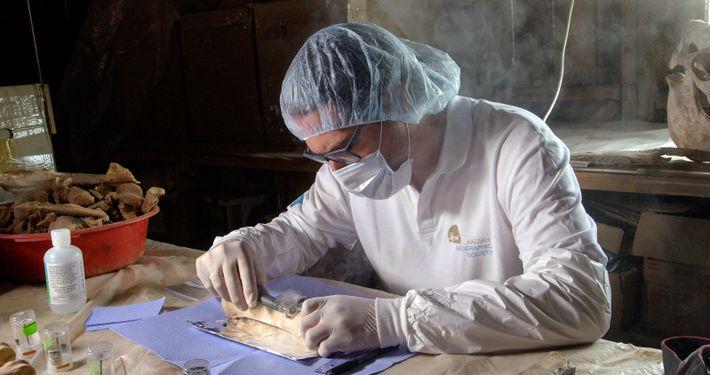 Ludovic Orlando extrait l'ADN anciens d'ossements dans son laboratoires de l'université de Toulouse III Paul Sabatier