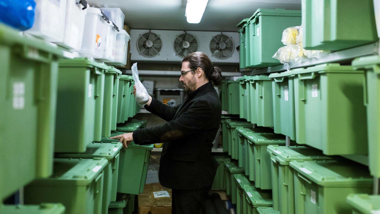 Dans son laboratoire du Centre d'Anthropologie et de Génomique de Toulouse, Ludovic Orlando conserve des ossements anciens ...