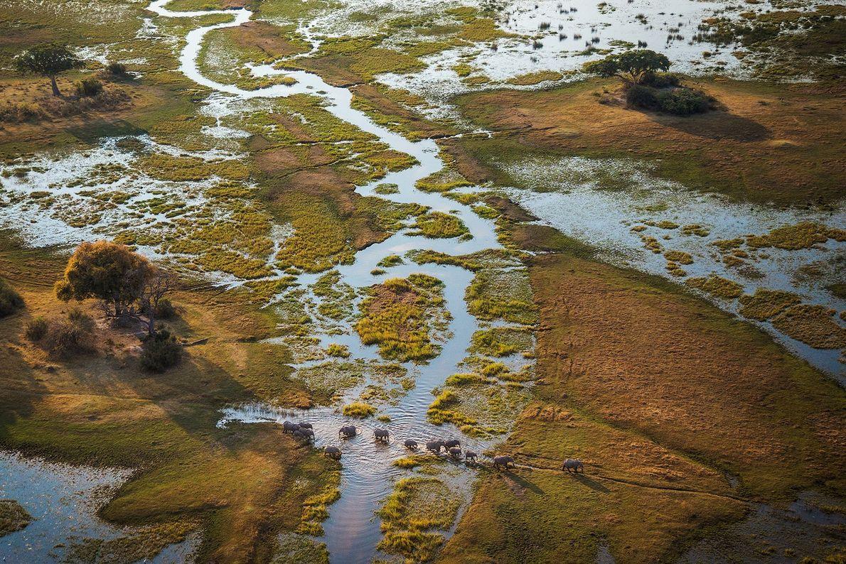Le delta de l'Okavango, au Botswana, abrite une faune et une flore d'une rare diversité. Le ...