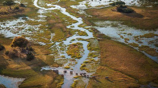 Découvrez le delta de l'Okavango en 360°