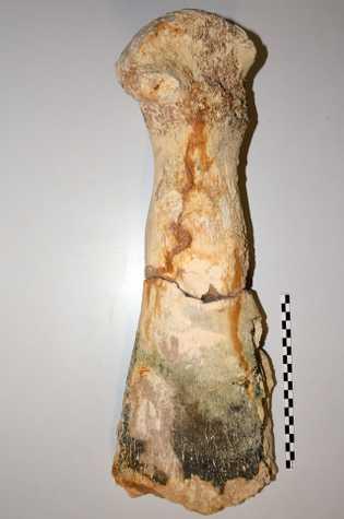 Fémur du plésiosaure retrouvé à Tuffalun.