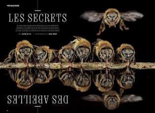 Les secrets des abeilles