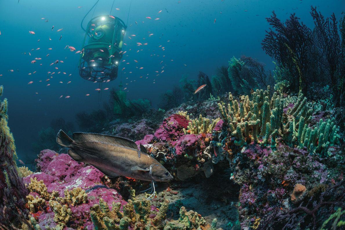 Chaque jour, une cloche à plongeur descendait l'équipe de l'auteur au fond de la mer depuis ...