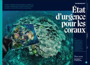 État d'urgence pour les coraux
