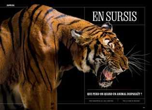 Aucune trace du tigre de Chine méridionale (Panthera tigris amoyensis) n'a été observée dans la nature ...