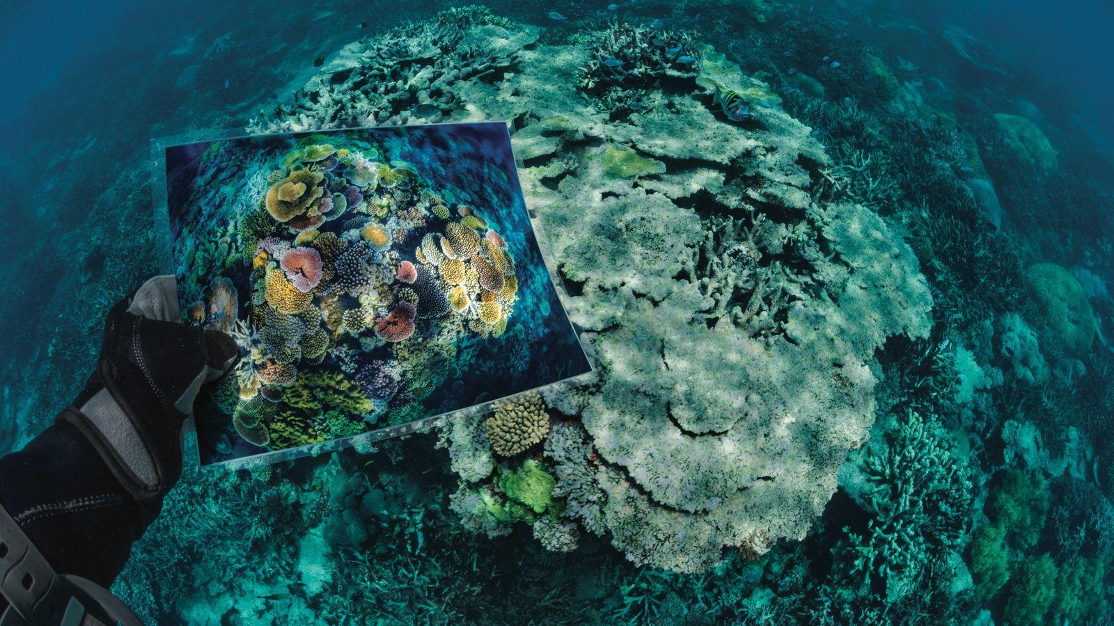 Le récif Opal, dans la Grande Barrière de corail, en Australie, a subi de gros dégâts ...