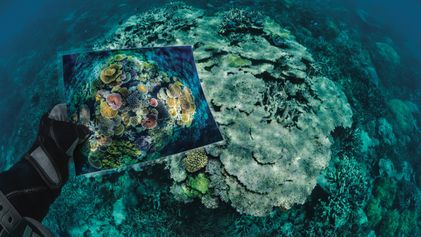 Reportage : état d'urgence pour les coraux