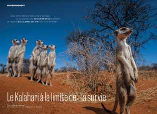 Le Kalahari à la limite de la survie
