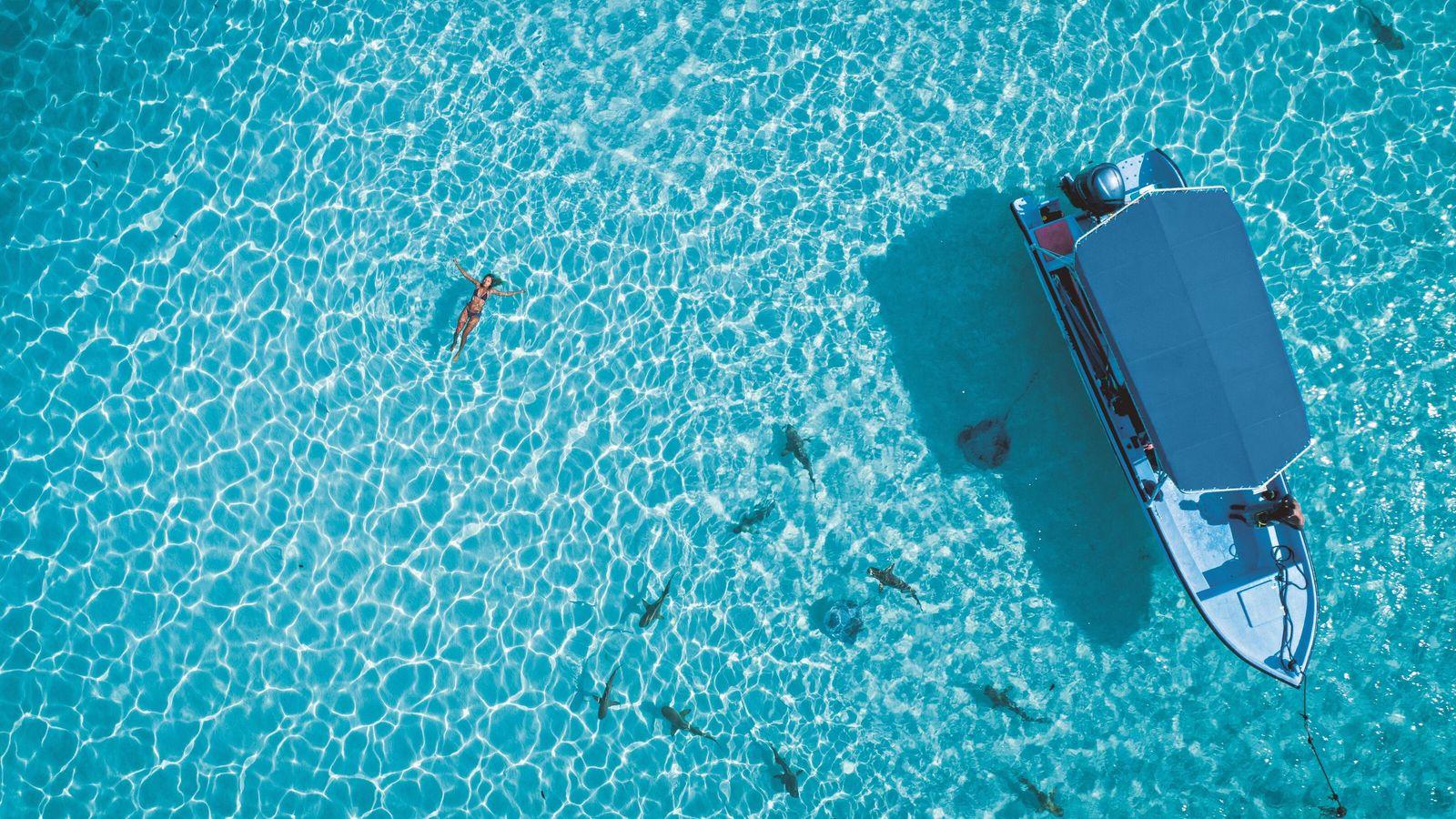 Nager en sécurité au milieu des requins et des raies attire les vacanciers dans les eaux ...