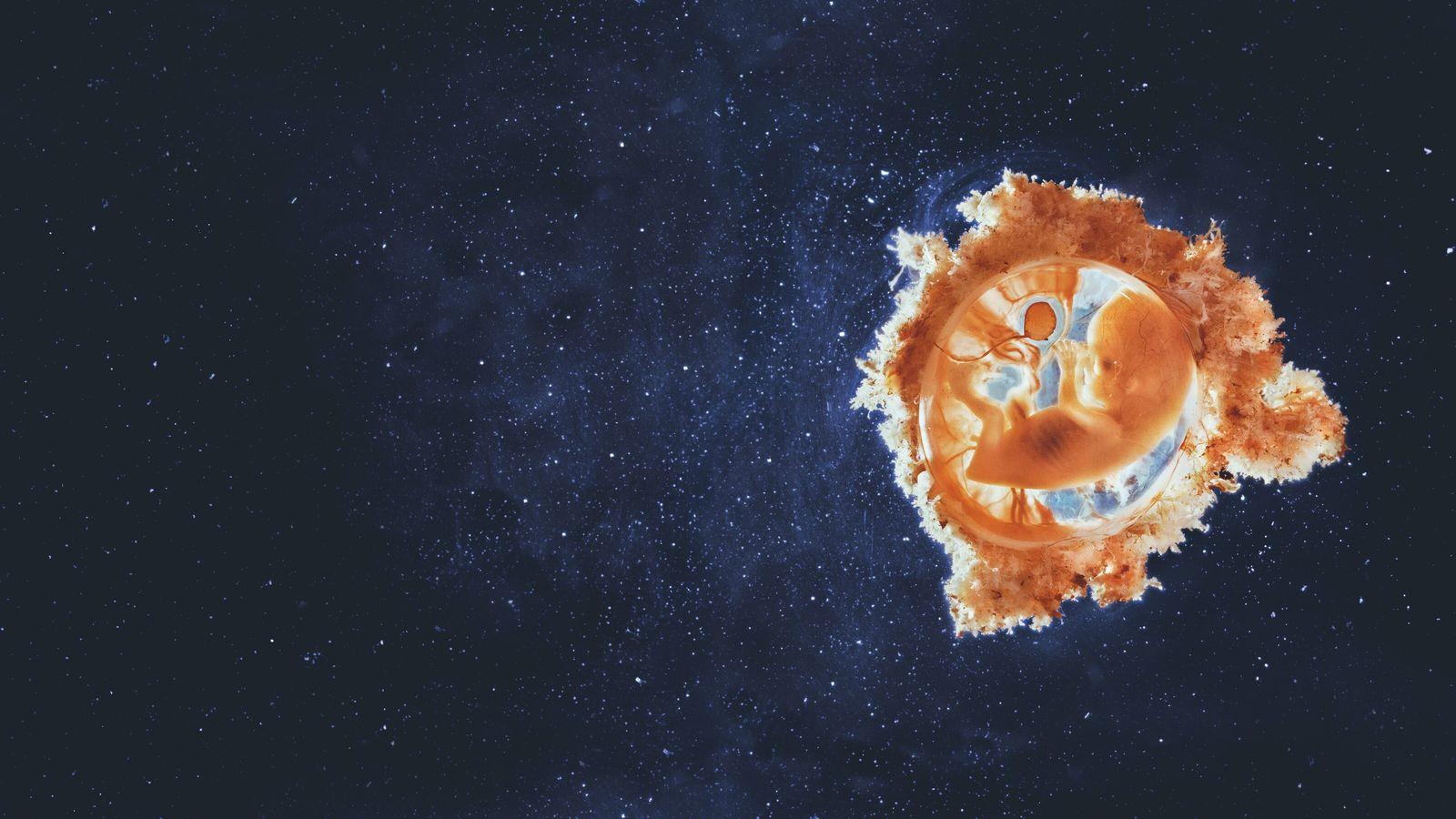 Agents de maladies, les virus font aussi des merveilles et façonnent l'évolution depuis le début de ...