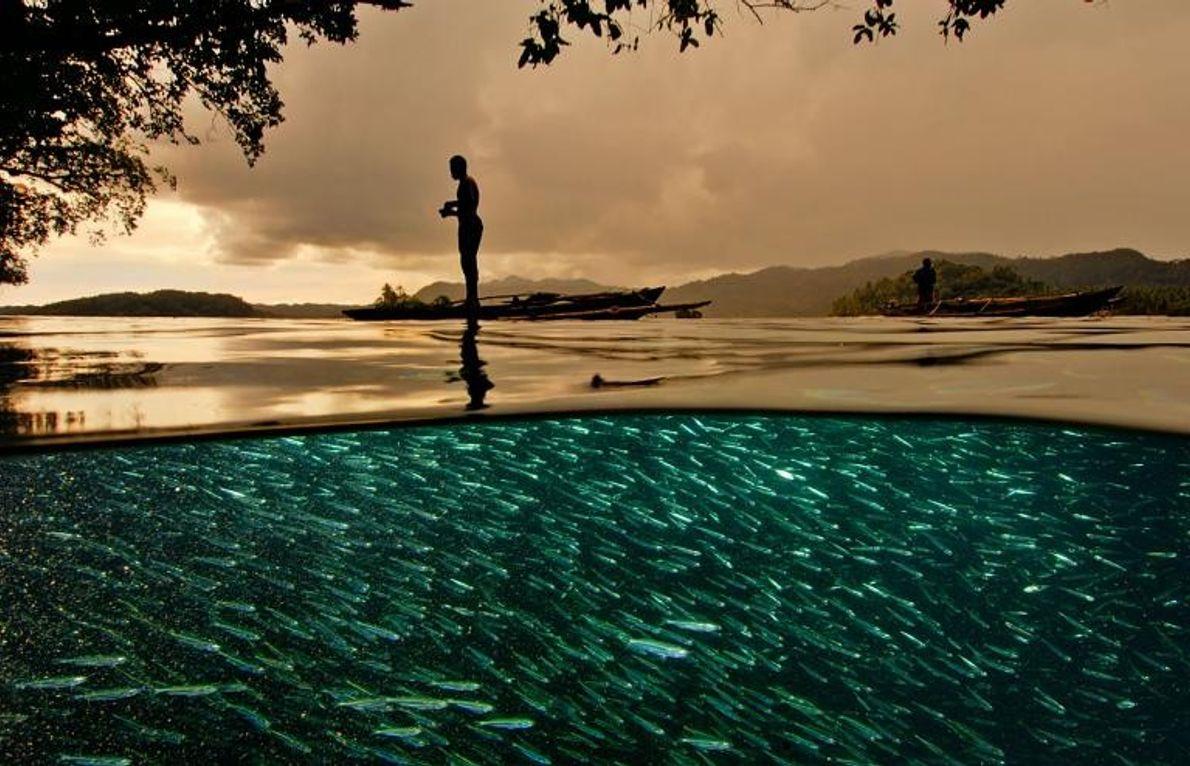 Dans les îles des Raja Ampat, clé de voûte du Triangle de corail en Indonésie, un ...