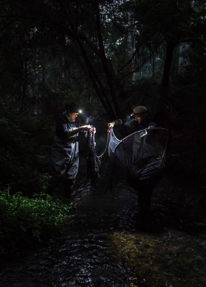 Alors que la lumière du jour commence à poindre dans la forêt, Josh Griffiths et la doctorante ...