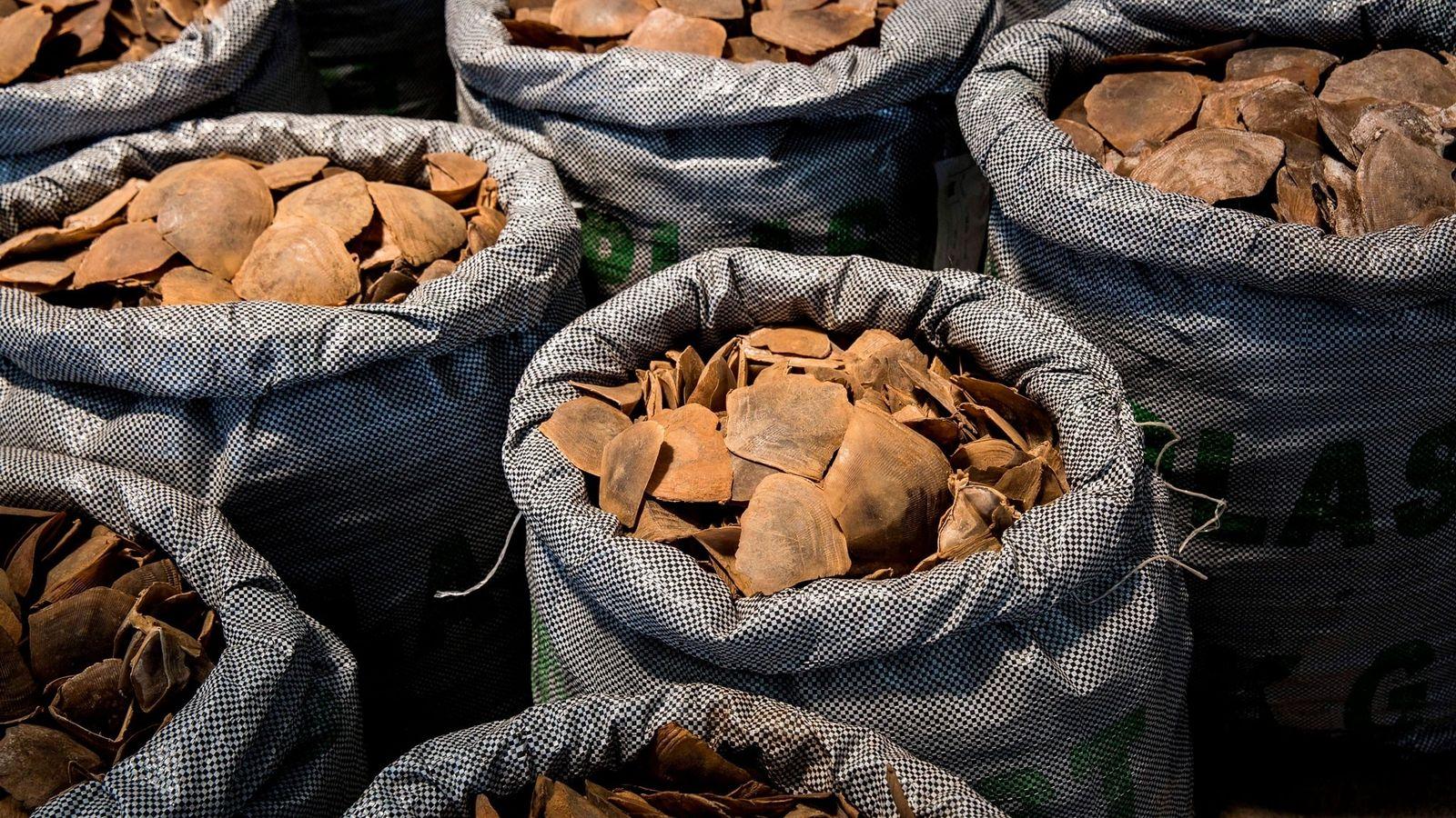 Plus de 128 tonnes d'écailles et de viande de pangolin ont été interceptées dans le monde ...