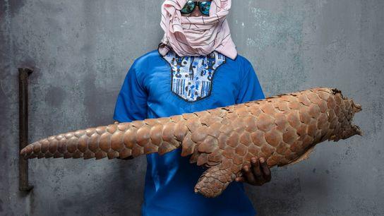 Un agent des forces de l'ordre en Côte d'Ivoire, masqué pour protéger son identité, brandit l'exosquelette ...
