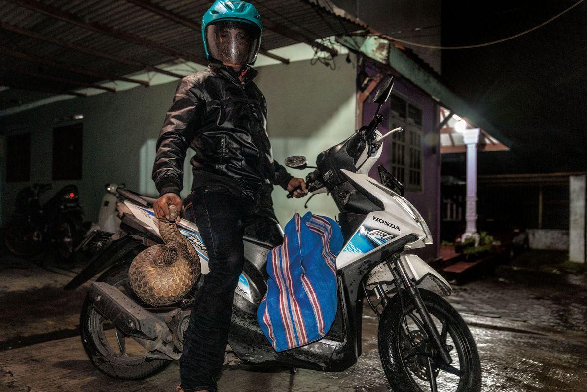 Ce chasseur en provenance d'un village indonésien indique livrer des pangolins dans la ville de Surabaya ...