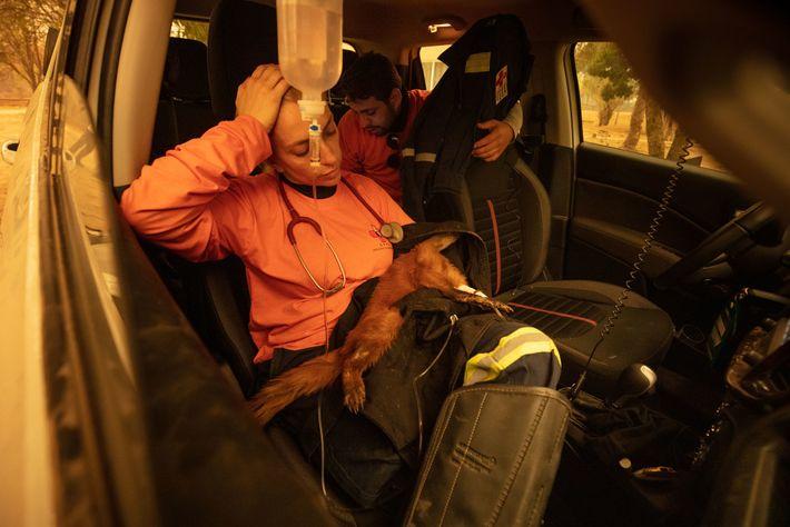 La vétérinaire Carla Sássi soigne un coati dont les pattes ont été gravement brûlées. L'animal n'a ...