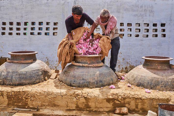 Des artisans-parfumeurs transvasent des pétales dans un grand alambic en cuivre. Avant de refermer le couvercle, ...