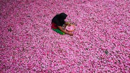 Kannauj, la capitale indienne du parfum