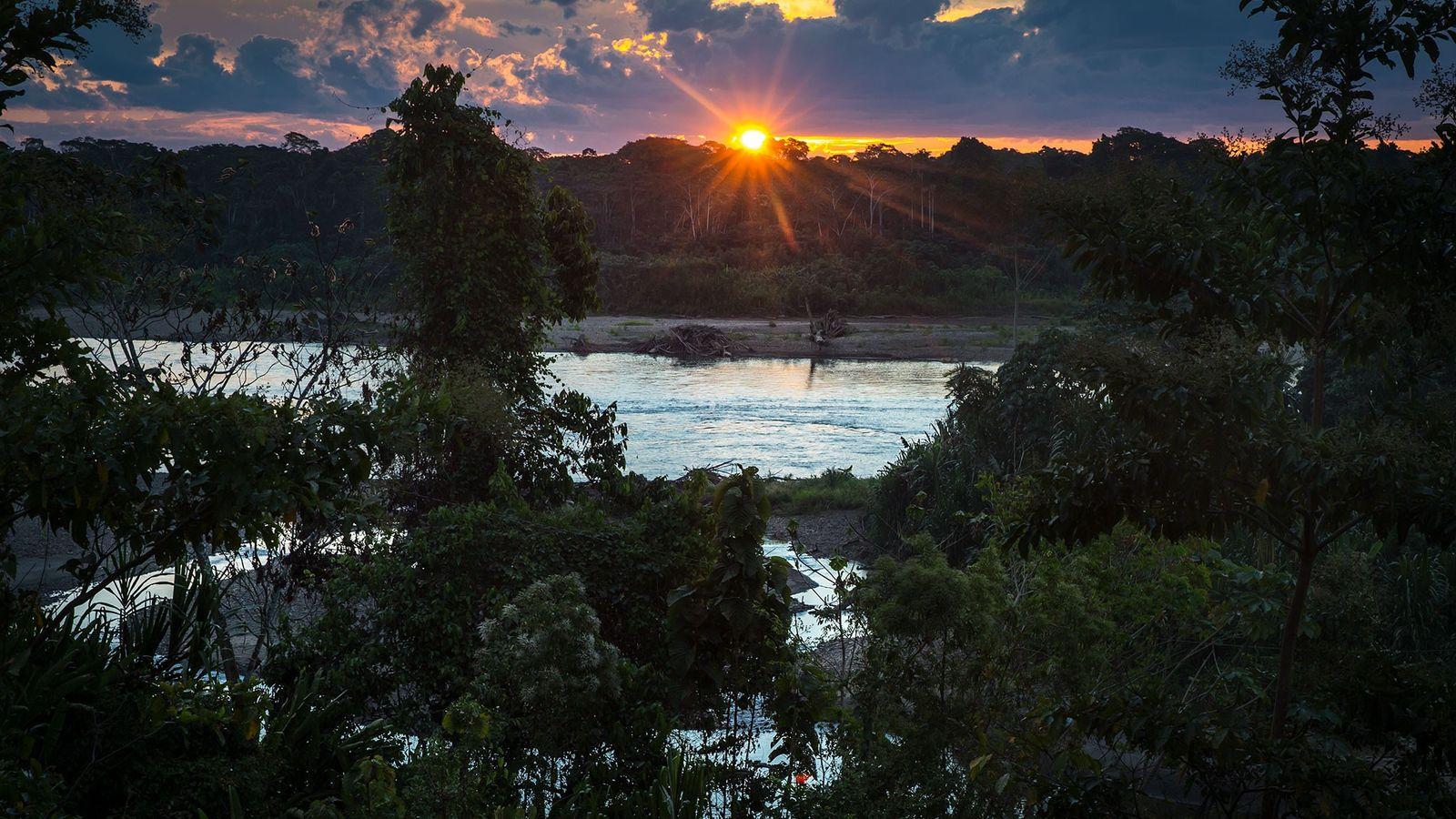 Au Pérou, la réserve Comunal Amarakaeri constitue une zone protégée gérée par le gouvernement péruvien et ...