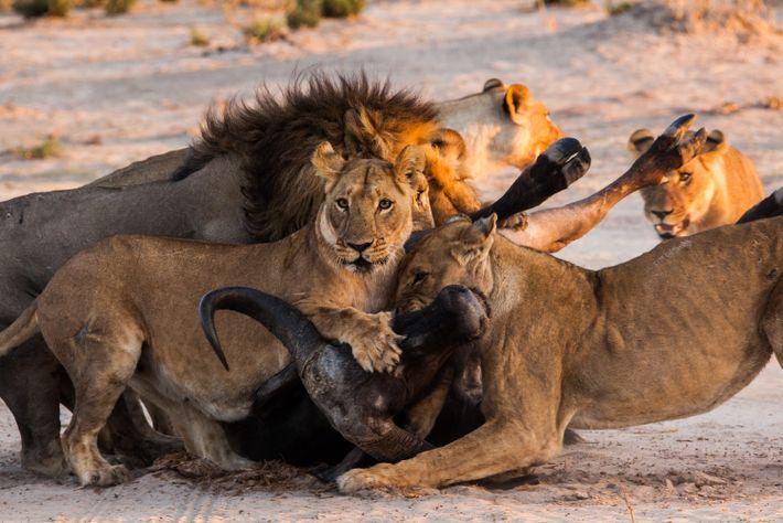 La royaume sauvage | Bande annonce