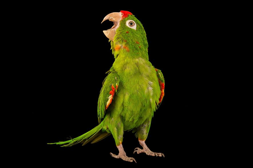 Nos plus belles photos de perroquets