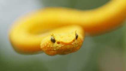 En mars sur National Geographic Wild