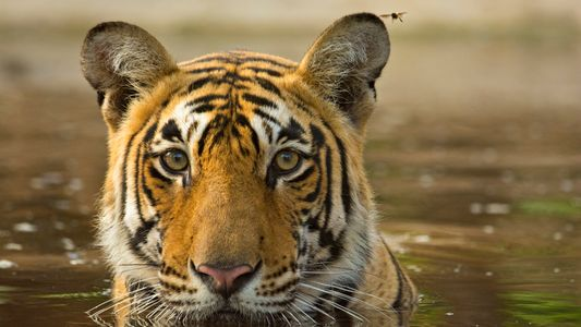En avril sur National Geographic Wild