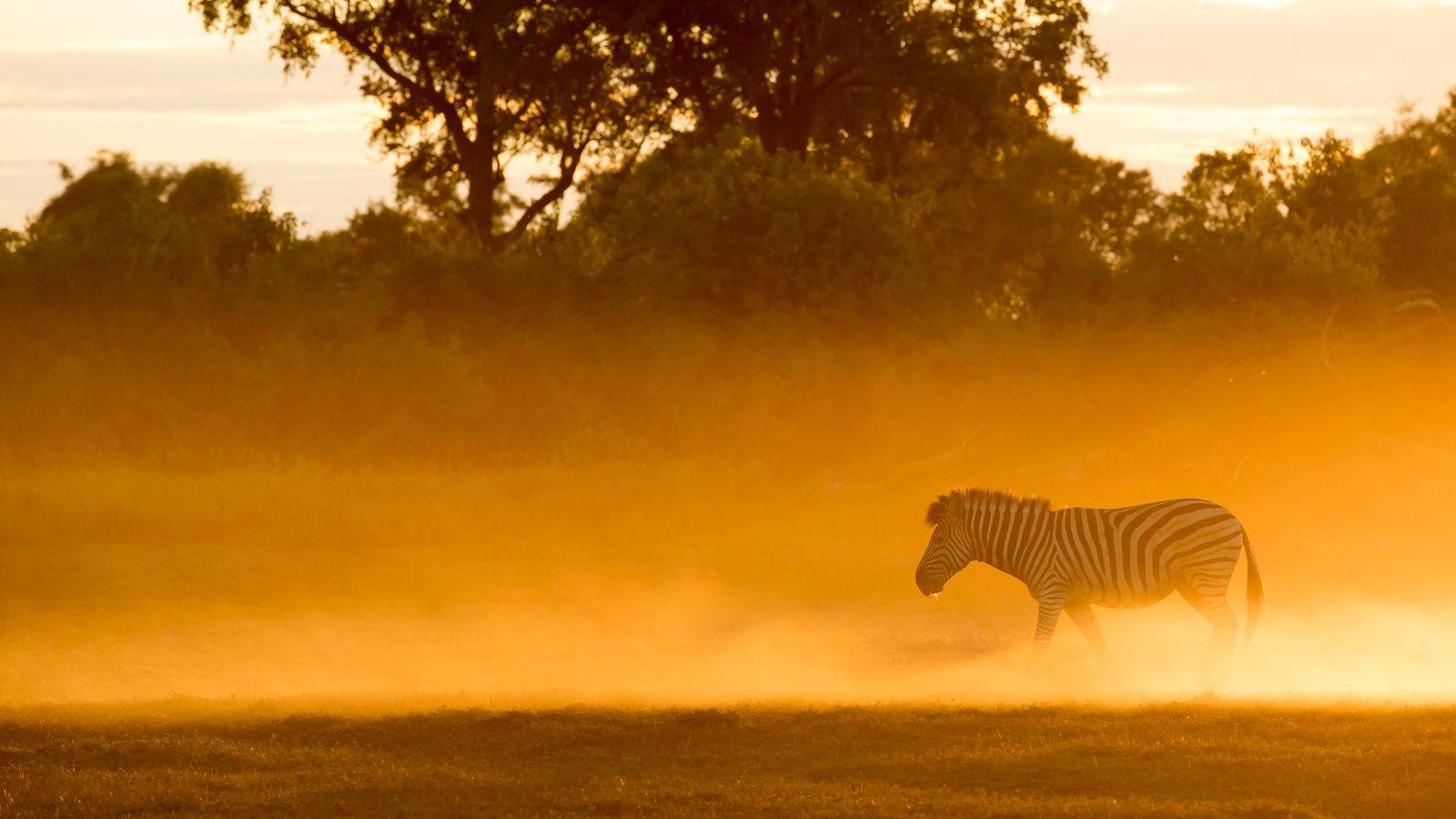 Le Royaume Sauvage revient pour une quatrième saison. Direction Mombo, dans le nord du Botswana, où ...