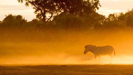 En mai sur National Geographic Wild