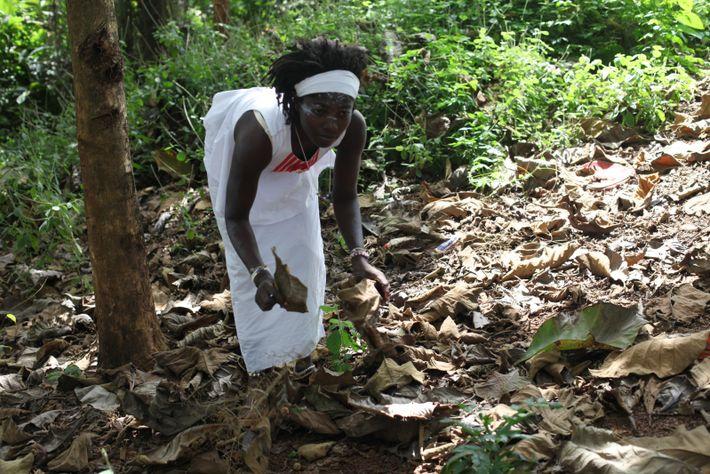 Bendé Akouma Solange en passe de terminer sa formation ramasse des feuilles sensées guérir les fibromes ...