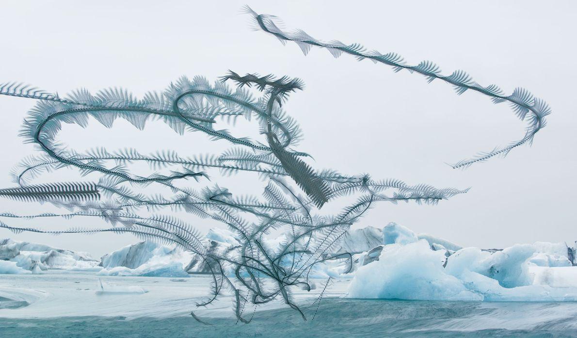 Un groupe de sternes arctiques pêchent le hareng à la sortie du lac Jökulsárlón, en Islande.Tandis ...