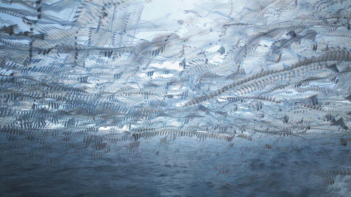 Des centaines de mouettes et de goélands qui suivent un bateau de pêche pour récupérer les ...