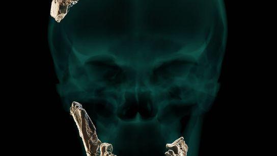 Les chercheurs ont utilisé les quelques restes du crâne de Nesher Ramla afin de créer une ...