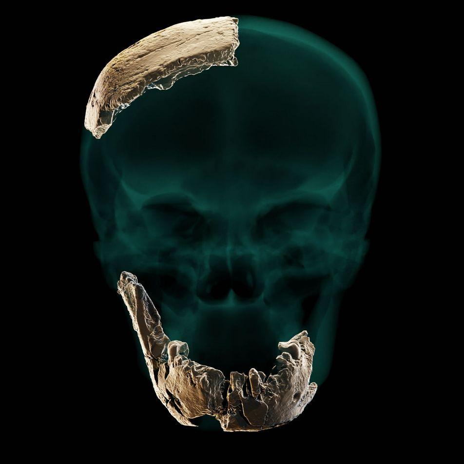 Deux espèces du genre Homo auraient-elles cohabité ?