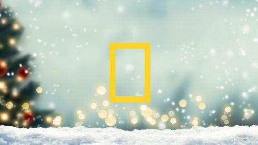 Noël 2020 : idées cadeaux National Geographic