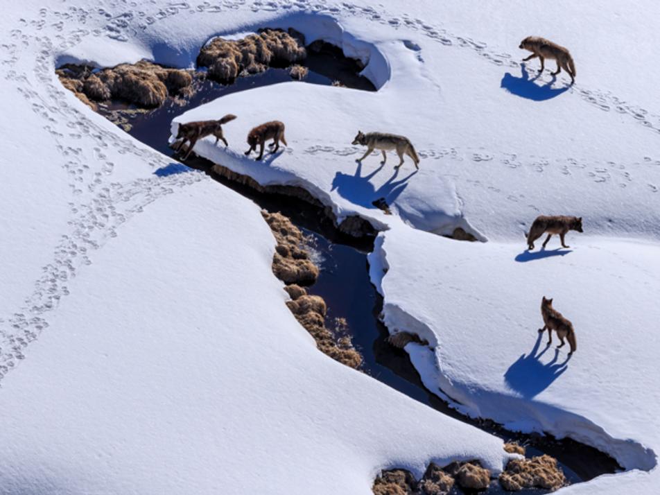 En janvier sur National Geographic Wild
