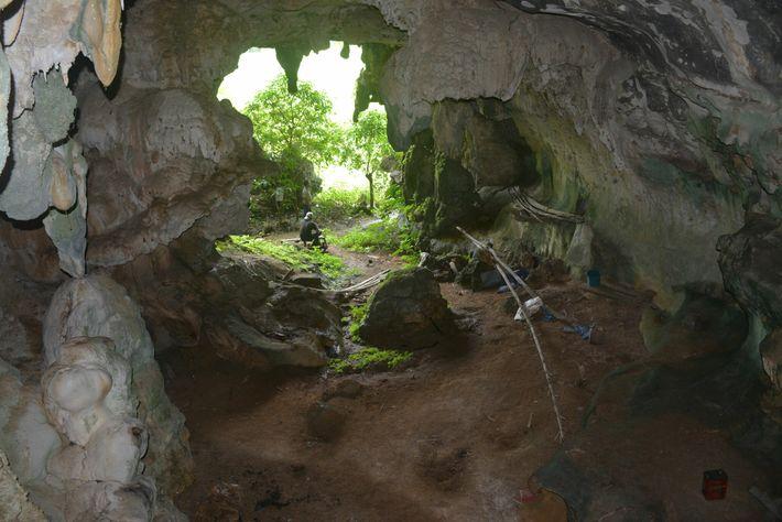 Les scientifiques ont découvert l'œuvre sur une paroi située au fond de la grotte. La peinture ...
