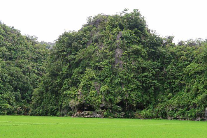 La grotte où a été découverte la plus ancienne peinture rupestre de sangliers, Leang Tedongnge, se trouve ...
