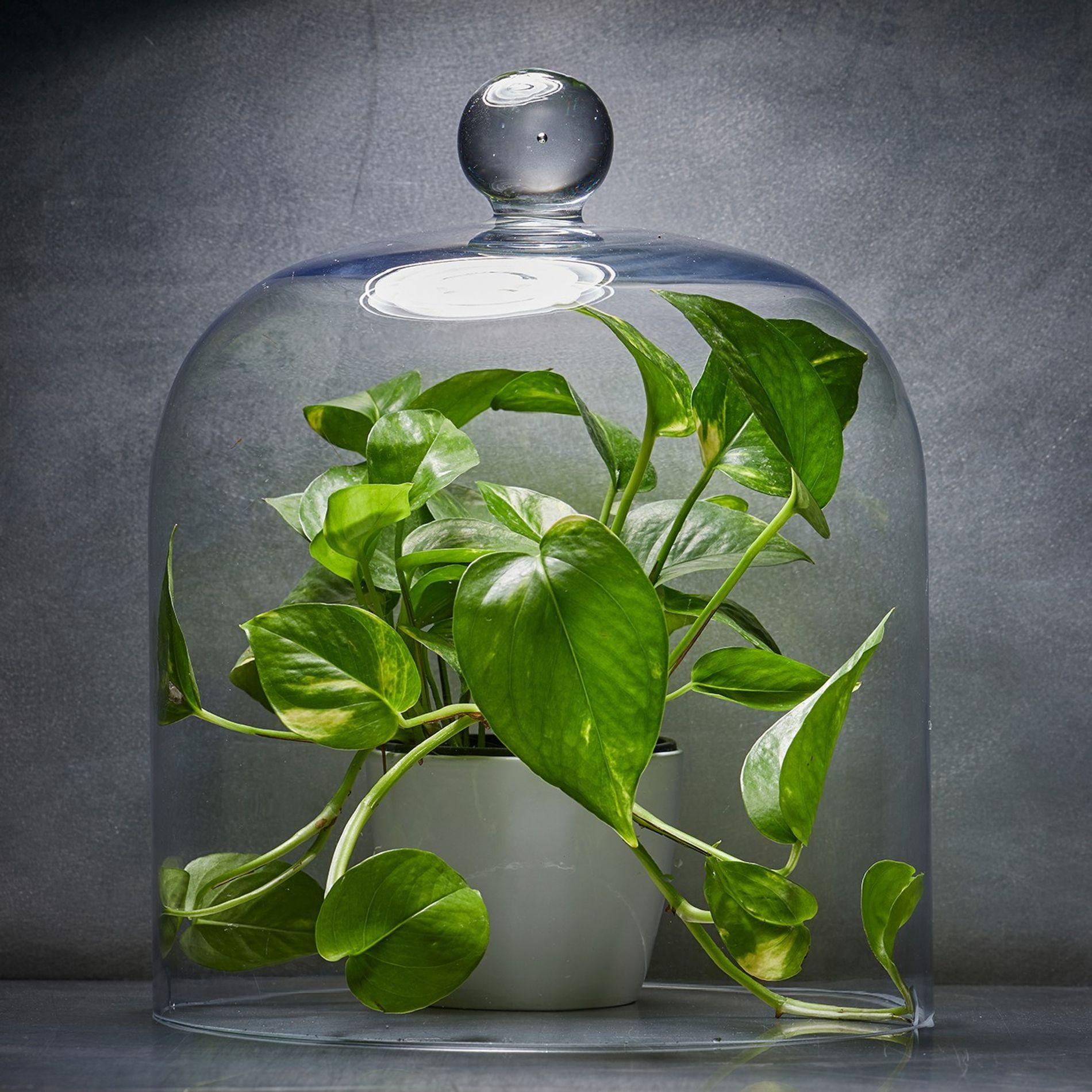 Suspension Pour Plantes D Intérieur quelle est la meilleure plante pour purifier l'air de votre