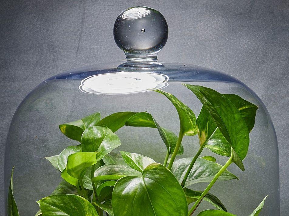 Quelle est la meilleure plante pour purifier l'air de votre maison ? Réponse : aucune