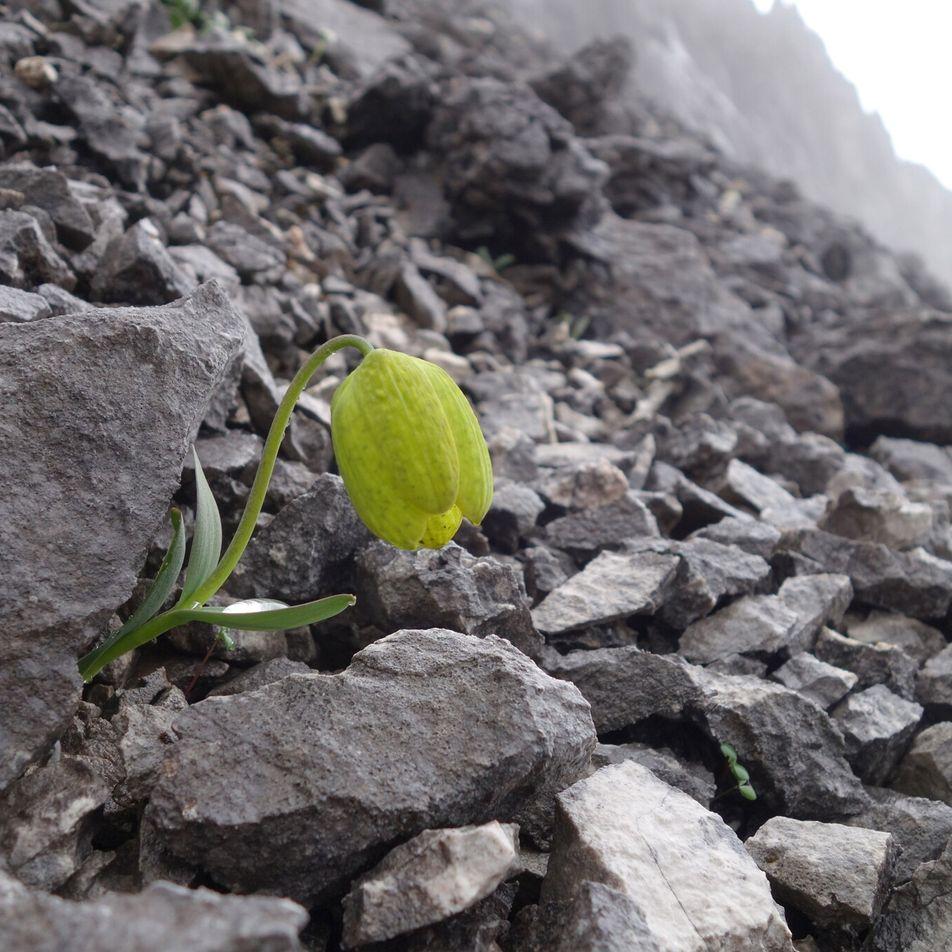 Cette plante a évolué pour éviter d'être cueillie par les Hommes