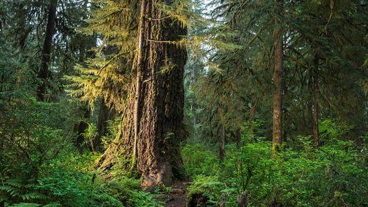 L'absorption du carbone par les plantes ne durera pas éternellement